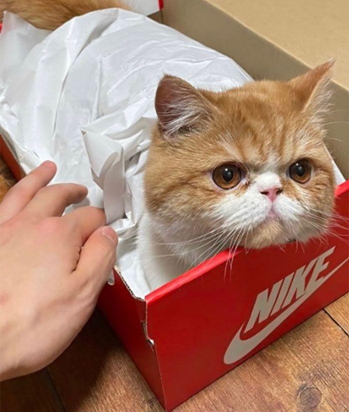 40 fotos de gatos em lugares que eles não deveriam estar 12