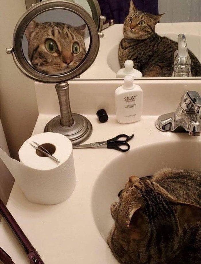 40 fotos de gatos em lugares que eles não deveriam estar 20