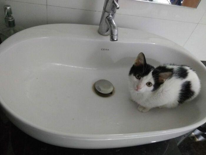 40 fotos de gatos em lugares que eles não deveriam estar 29