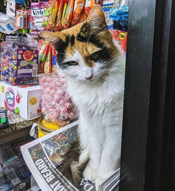 40 fotos de gatos em lugares que eles não deveriam estar 30