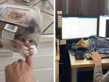 40 fotos de gatos em lugares que eles não deveriam estar 2