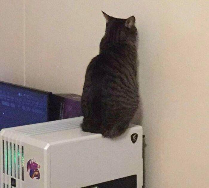 38 fotos engraçadas de gatos com defeito 6