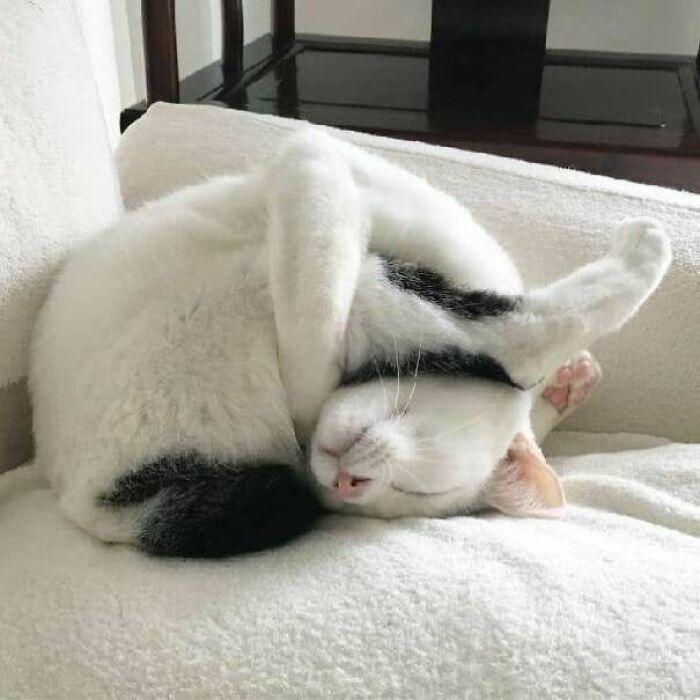 38 fotos engraçadas de gatos com defeito 7