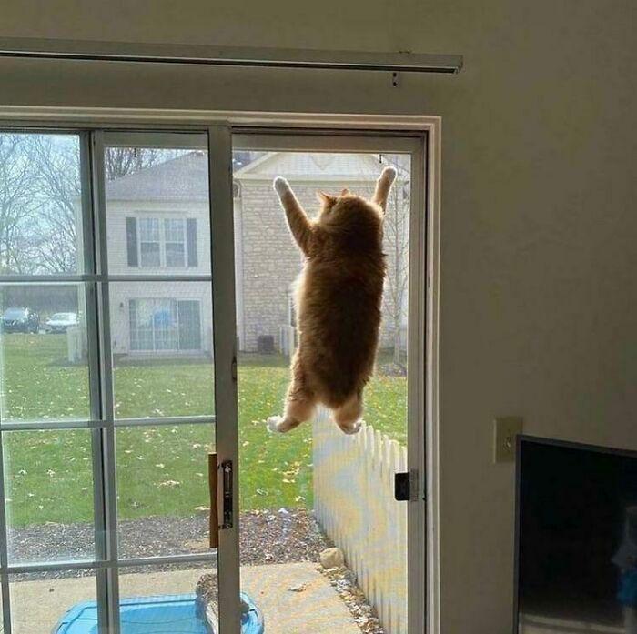 38 fotos engraçadas de gatos com defeito 8