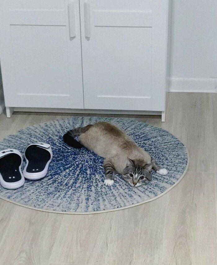 38 fotos engraçadas de gatos com defeito 15