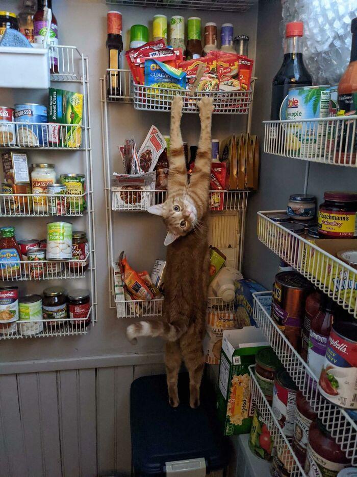 38 fotos engraçadas de gatos com defeito 21