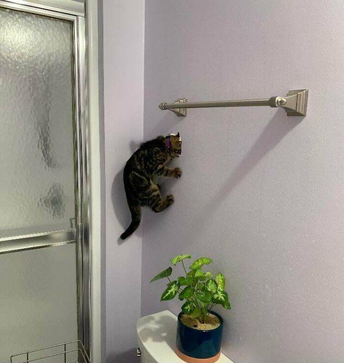 38 fotos engraçadas de gatos com defeito 22