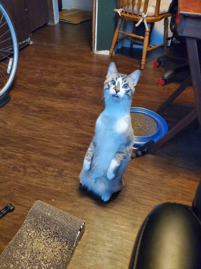 38 fotos engraçadas de gatos com defeito 26