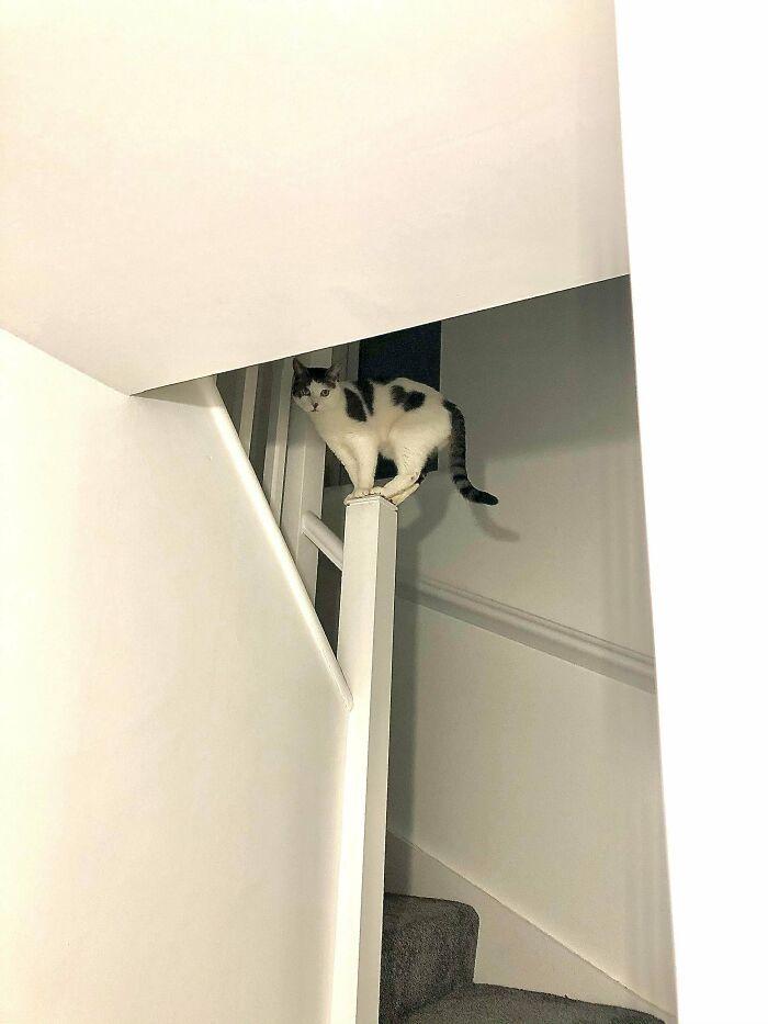 38 fotos engraçadas de gatos com defeito 29