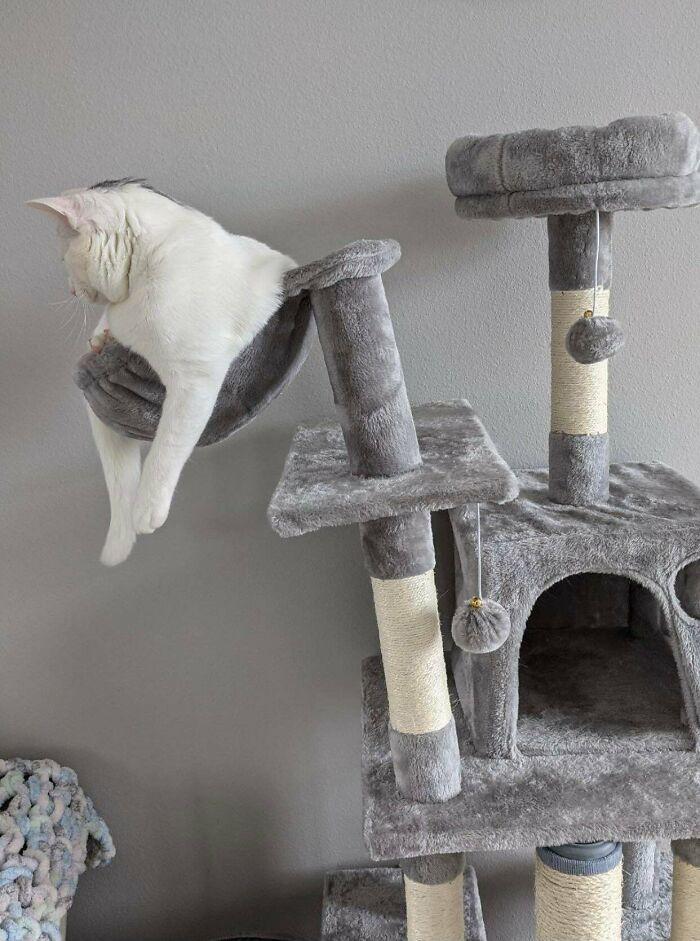 38 fotos engraçadas de gatos com defeito 32