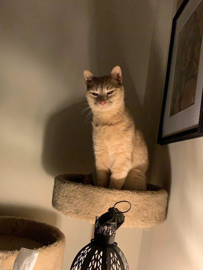 38 fotos engraçadas de gatos com defeito 35