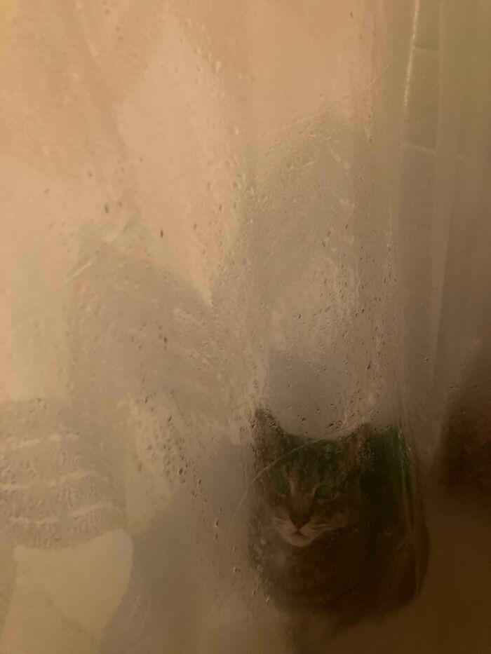 38 fotos engraçadas de gatos com defeito 36