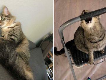 38 fotos engraçadas de gatos com defeito 25