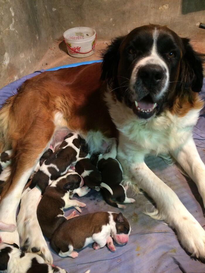 44 cachorros orgulhosos com seus filhotes 3