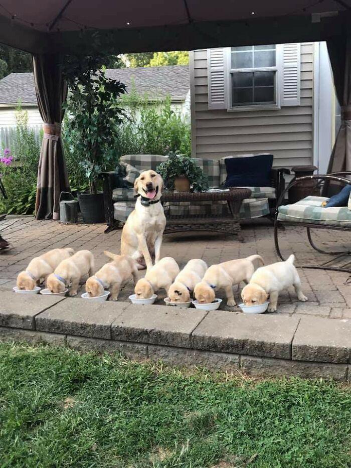 44 cachorros orgulhosos com seus filhotes 7
