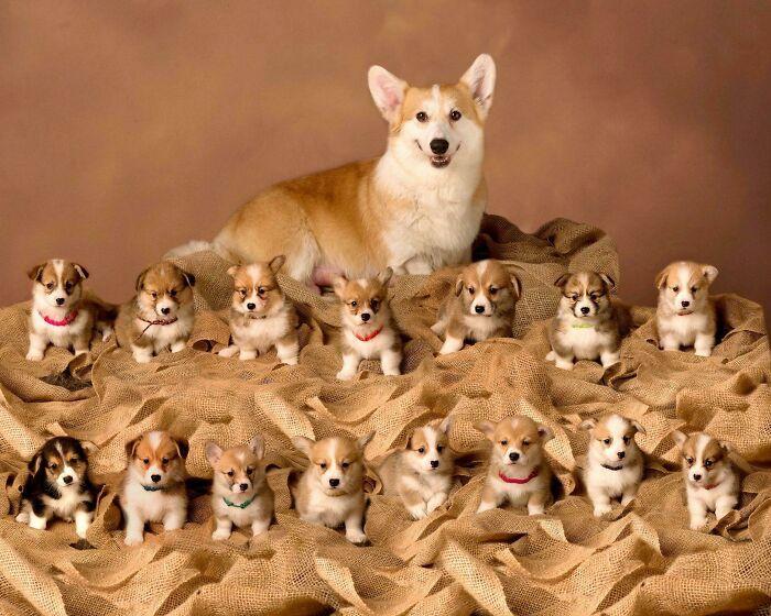 44 cachorros orgulhosos com seus filhotes 8