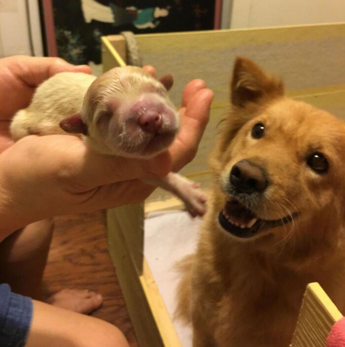 44 cachorros orgulhosos com seus filhotes 9