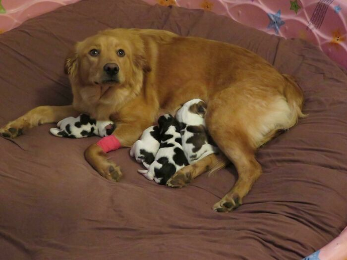 44 cachorros orgulhosos com seus filhotes 11