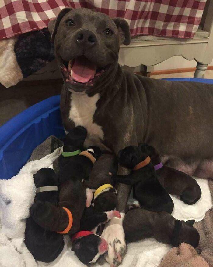 44 cachorros orgulhosos com seus filhotes 12