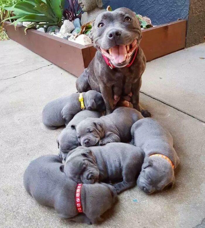 44 cachorros orgulhosos com seus filhotes 14