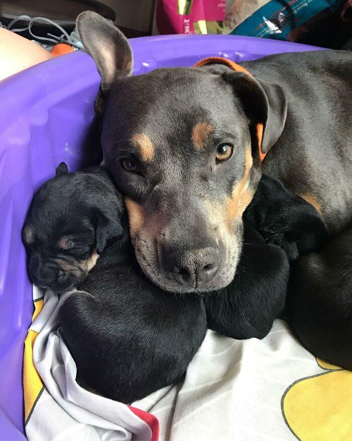 44 cachorros orgulhosos com seus filhotes 17