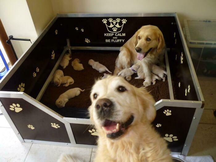 44 cachorros orgulhosos com seus filhotes 21