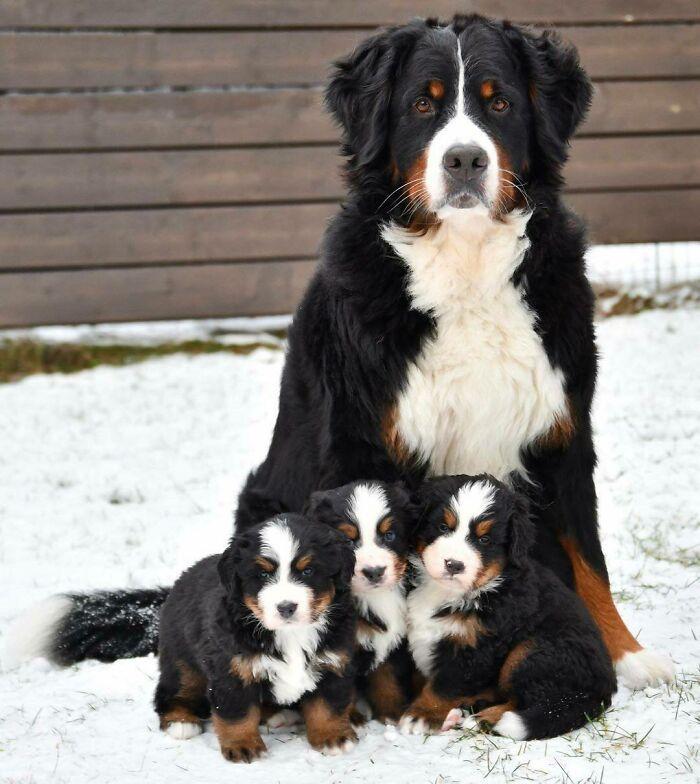 44 cachorros orgulhosos com seus filhotes 22