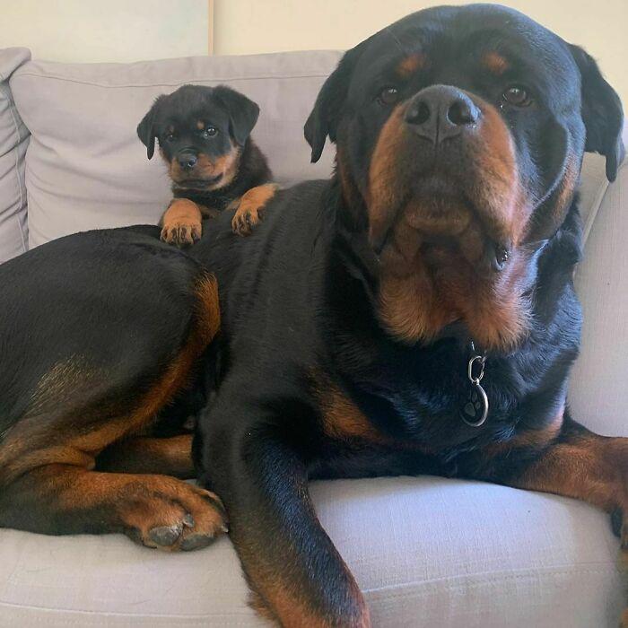 44 cachorros orgulhosos com seus filhotes 25