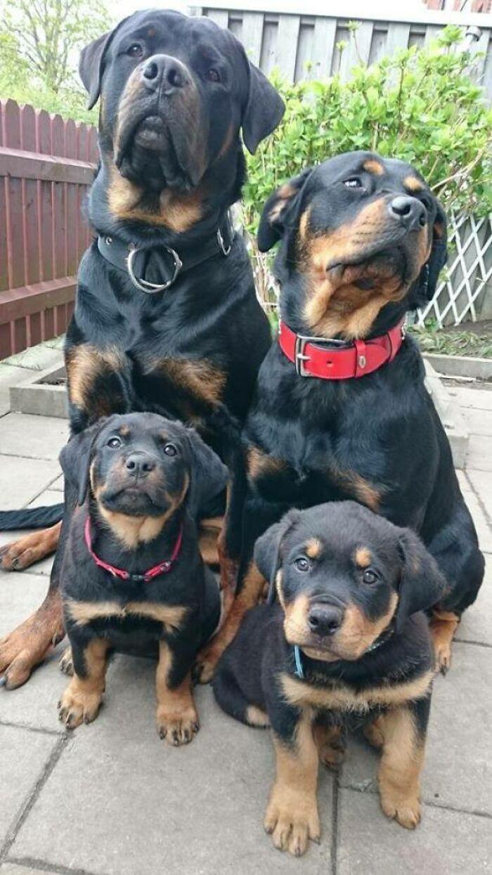 44 cachorros orgulhosos com seus filhotes 27