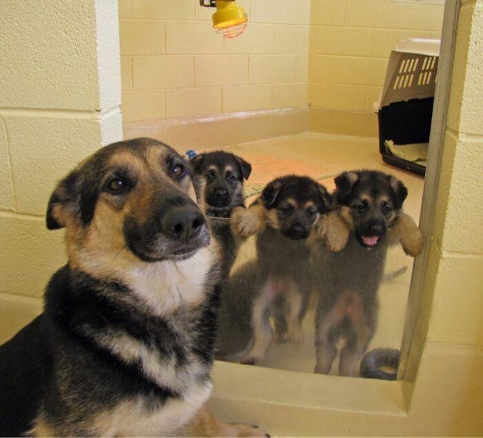 44 cachorros orgulhosos com seus filhotes 28