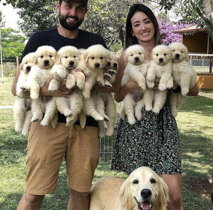 44 cachorros orgulhosos com seus filhotes 33