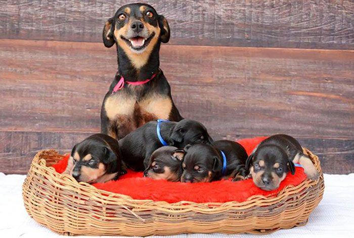 44 cachorros orgulhosos com seus filhotes 37