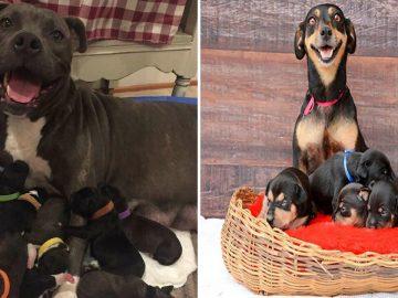 44 cachorros orgulhosos com seus filhotes 13