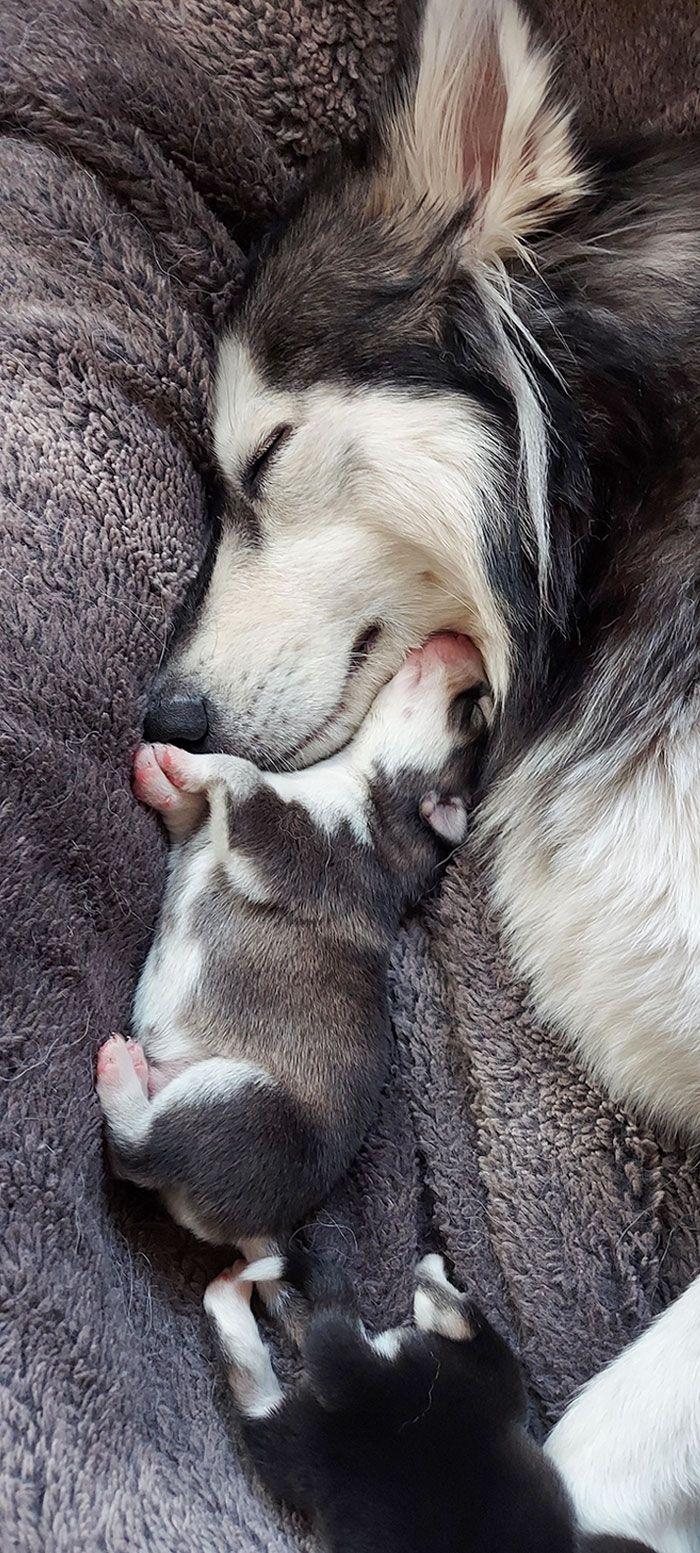 44 cachorros orgulhosos com seus filhotes 41