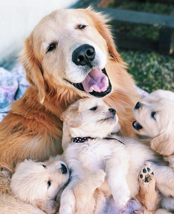 44 cachorros orgulhosos com seus filhotes 42