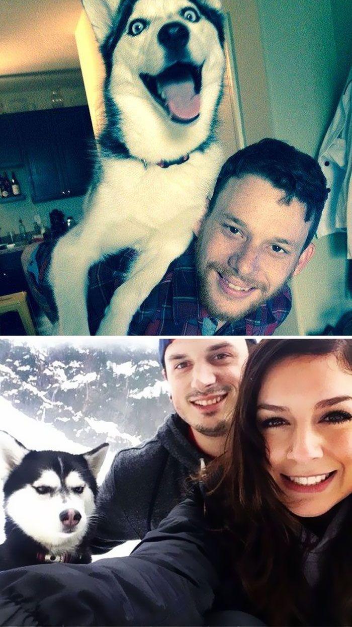57 fotos hilárias de cachorro para colocar um sorriso em seu rosto 7