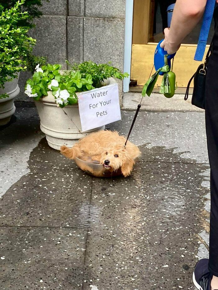 57 fotos hilárias de cachorro para colocar um sorriso em seu rosto 18