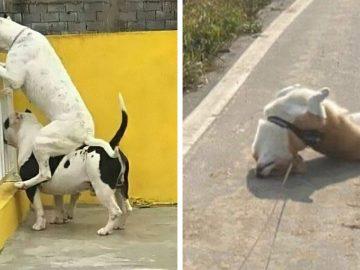 57 fotos hilárias de cachorro para colocar um sorriso em seu rosto 2