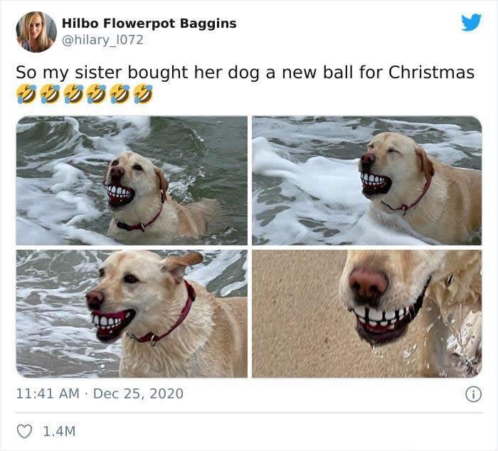 57 fotos hilárias de cachorro para colocar um sorriso em seu rosto 52