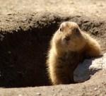 groundhog-629863_640 copy