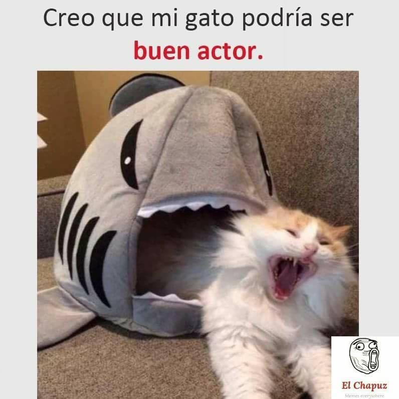 Curiosidades Y Memes Para El Dia Del Gato Teecketing