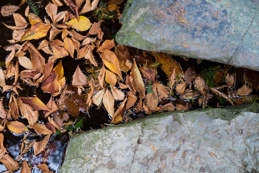 Autumn, fall, leaves, seasons, water, rock, stream, New Westminster, BC, Canada