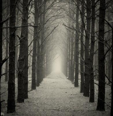 robert frost fog