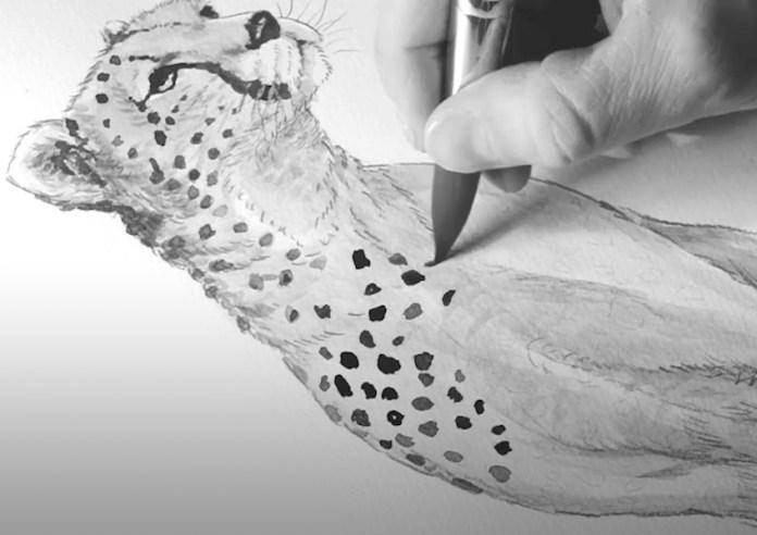 Tegning av gepard. Sort og gråfarger påføres med pensel.