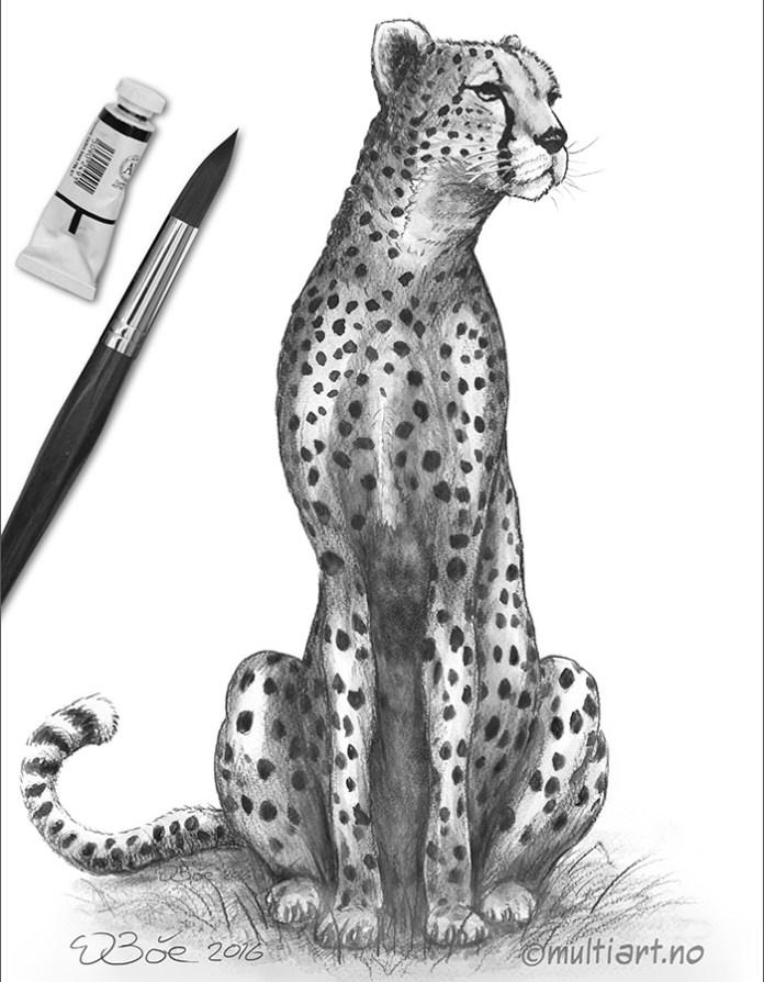 Tegning av en Gepard