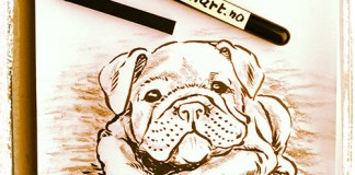 Bulldog puppy drawing