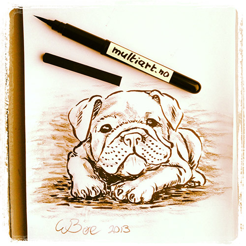 Bulldog puppy drawing