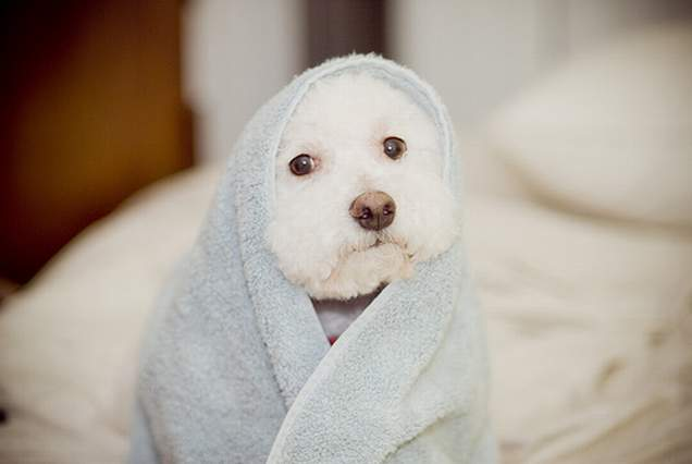 Puppy staying cozy in a towel