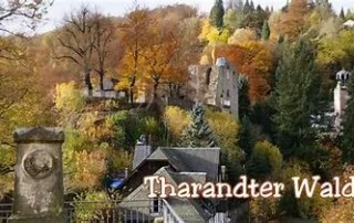 Tharandter-Wald-Burgruine