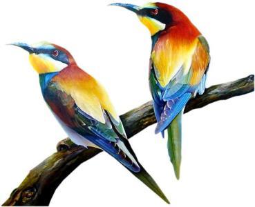 Tir nature - Oiseaux